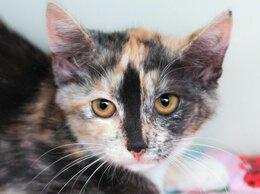 Кошки - Пёстрая многоцветная Шалина, магнит для вашей …, 0