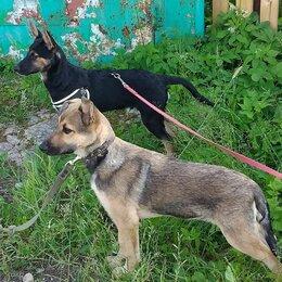 Собаки - Щенок в добрые руки, щенки Истра , 0