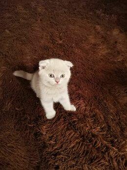 Кошки - Продаю котят, 0