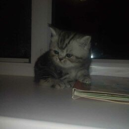 Кошки - Очаровательные милашки, 0
