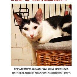 Животные - Пропал кот, 0
