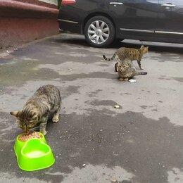 Животные - Трое подрощенных котят, 0