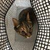 Пропала кошка по цене не указана - Животные, фото 1