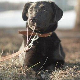Собаки - Лабрадористая девочка, 0