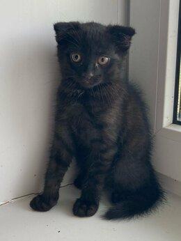 Кошки - Вислоухий котёнок, 0