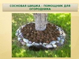 Рассада, саженцы, кустарники, деревья - Шишки для сада, 0
