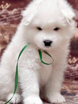Собаки - Щенки самоеда, 0