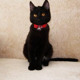 Кошки - Молодая стерилизованная кошечка в добрые руки, 0