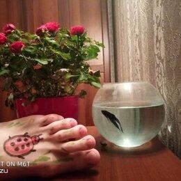 Услуги для животных - Обслуживание аквариумов. Чистка, 0