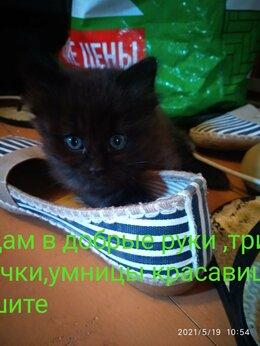Кошки - Отдам котенок в добрые руки, 0