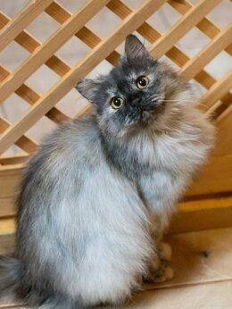 Кошки - Милая Молли, чудесное облачко, ждет вас в…, 0