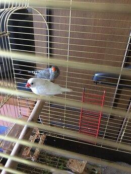 Птицы - Пара Амадин , 0
