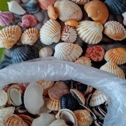 Декорации для аквариумов и террариумов - Морские ракушки , 0
