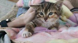 Кошки - Котейки в добрые руки, 0