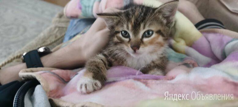 Котейки в добрые руки по цене 1₽ - Кошки, фото 0