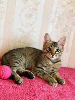 Кошки - Котенок Гриша, 0