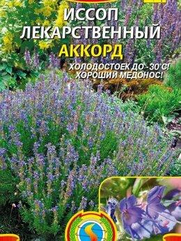 Семена - Аккорд Пр.Иссоп Плазма 0,5гр, 0