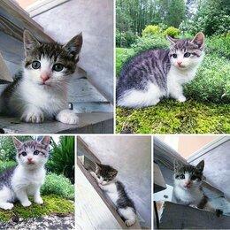 Кошки - Котенок девочка 1,5 месяца, 0