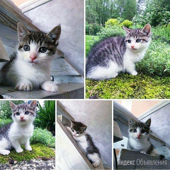 Котенок девочка 1,5 месяца по цене даром - Кошки, фото 0