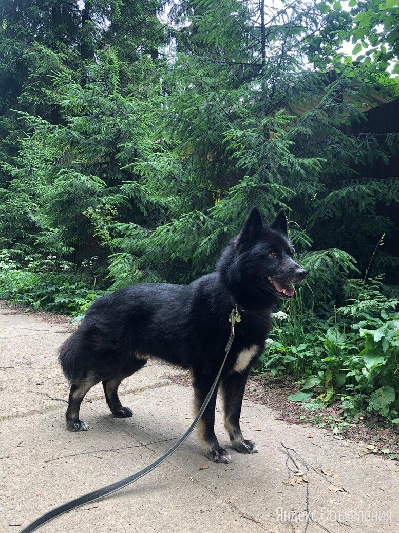 Собака ищет дом по цене даром - Собаки, фото 0