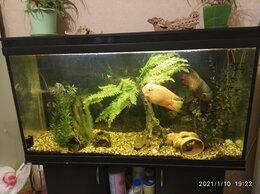 Аквариумы, террариумы, тумбы - Аквариум с рыбами, 0