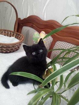 Кошки - Котята в добрые руки., 0