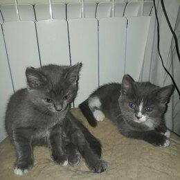 Кошки - Животные , 0