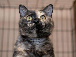 Кошки - Нежная и любопытная Женуария, 0