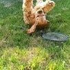 Радостный щенок 🐶 по цене 30000₽ - Собаки, фото 4