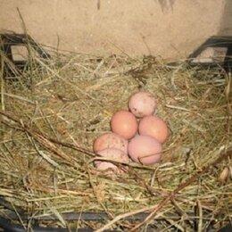 Продукты - Яйца домашние куриные , 0