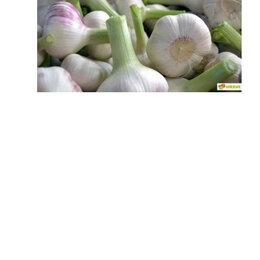 Лук-севок, семенной картофель, чеснок - продам  вызревший чеснок ., 0
