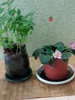 Комнатные растения - Цветы домашние, 0