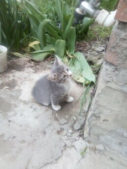 Кошки - ОТДАЮ ДАРОМ, 0