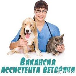 Работа с животными - Ассистент ветеринарного врача, 0