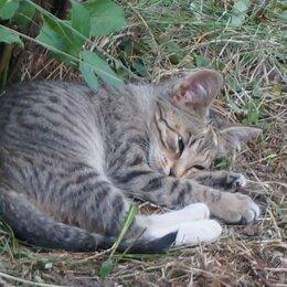 Кошки - Три полуторамесяных котенка ищут свой кров, 0