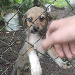 Собаки - Отдам щенков в добрые руки, 0