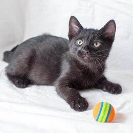 Кошки - Котёнок Йогурт 3 месяца в добрые руки, 0