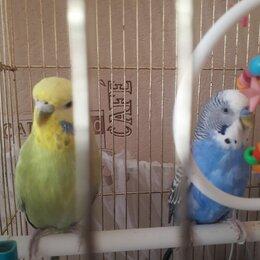 Птицы - волнистый попугай, 0