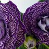 Глоксинии (излишки коллекции) по цене 30₽ - Комнатные растения, фото 14