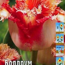 Луковичные растения - Тюльпан бахромчатый Боллрум 8 шт, 0