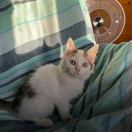 Кошки - Шварцнеггер в подарок , 0