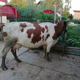 Сельскохозяйственные животные и птицы - Корова , 0