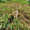 Животное по цене даром - Кошки, фото 1