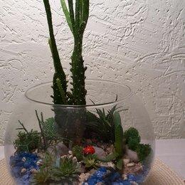 Комнатные растения - Флорариум - эксклюзивный подарок!, 0