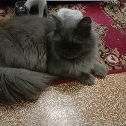 Кошки - Котята дымчатые и белые, 0