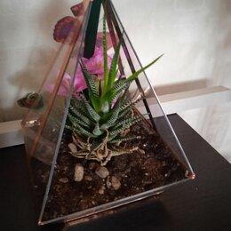 Комнатные растения - Флорариум пирамида, 0