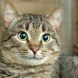 Кошки - Кот Макфлай, спасенный из квартиры собирательницы, 0