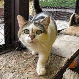 Кошки - Бывшедомашняя кошечка ищет хорошую хозяйку! , 0