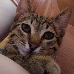 Животные - Милый Котик ищет хозяина!, 0