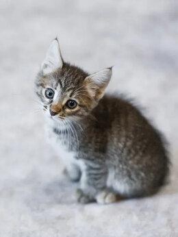 Кошки - Котенок в добрые руки, 0